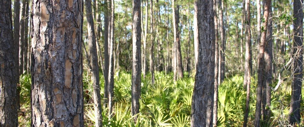 Timberland Investments are a pure means of green investing in a renewable resource.