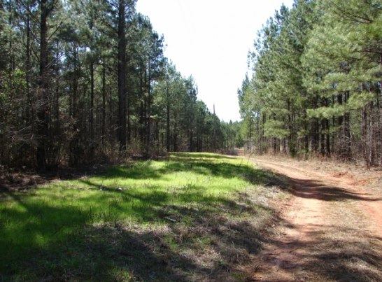 TImberland Investments in Alabama and Georgia present great value protections as a hard asset.